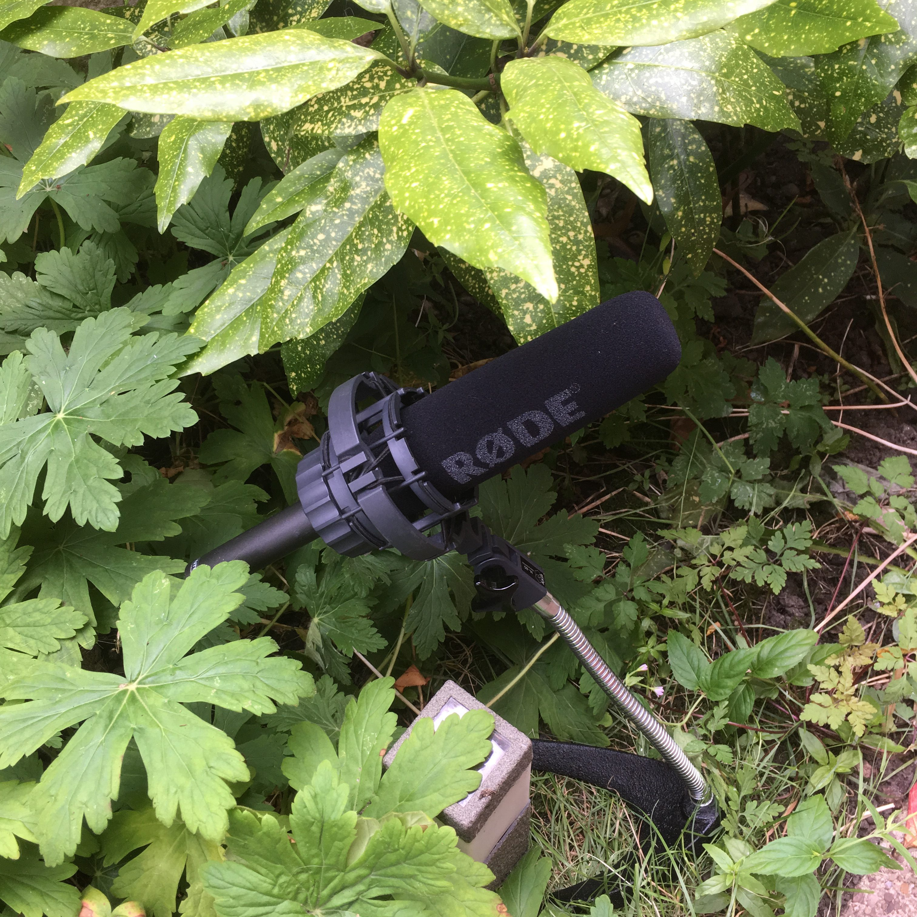 Microphone in a Bush - Junction 6 - .chis